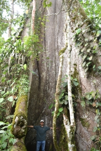 Photo: Jeff with giant Ceibo tree